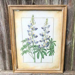 Botanical Framed Art Lupinus Cruckshanksii 18″ x 1